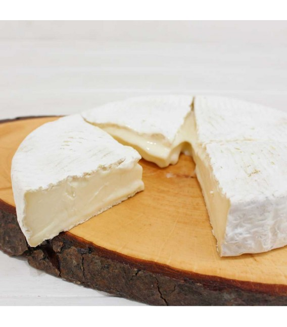 Queso Cervellán