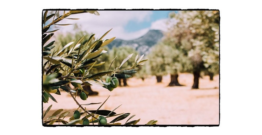 El aceite de oliva más caro del mundo