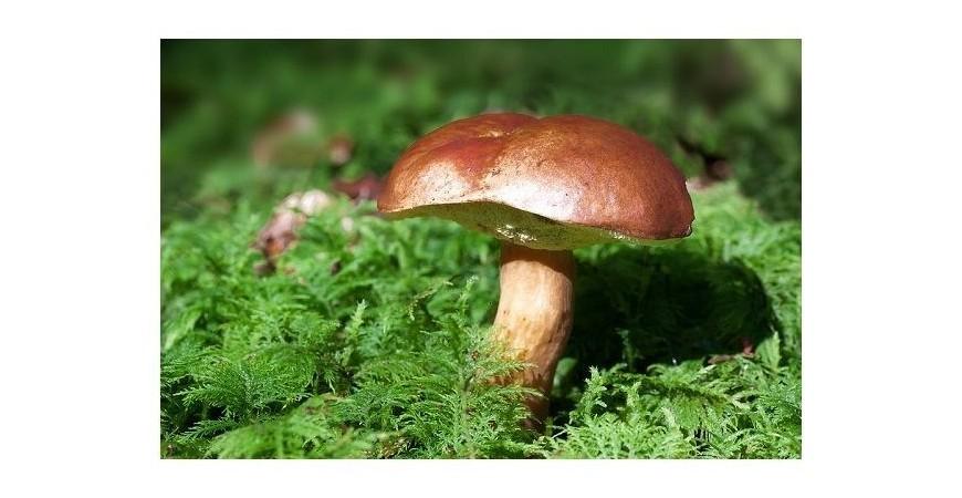 Recetas con hongos, las más sabrosas y sencillas.