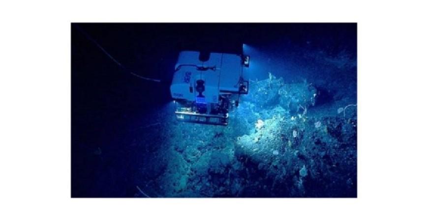 Viaja a lo profundo del océano