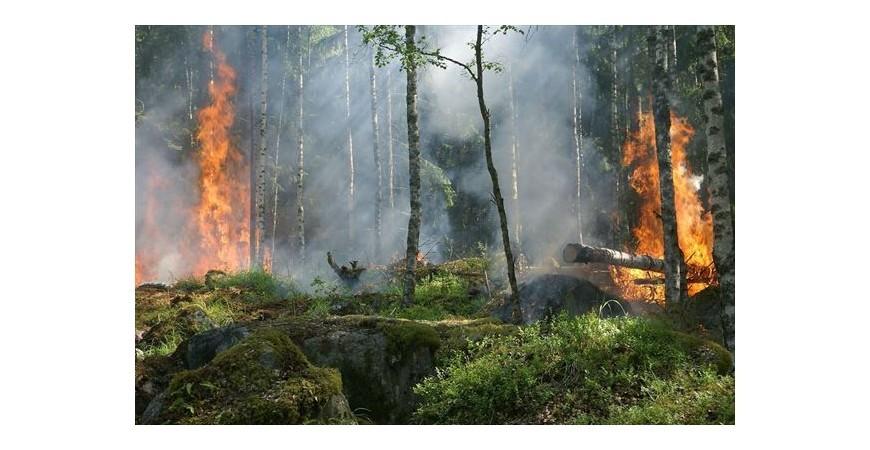 Deforestación: cuáles son sus causas, consecuencias y soluciones