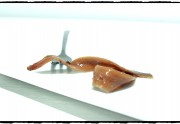 Conserveras de anchoa artesanales de Santoña